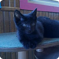 Adopt A Pet :: Twinkie *Visit Me @ Blue Dog in Lemoyne! - Harrisburg, PA