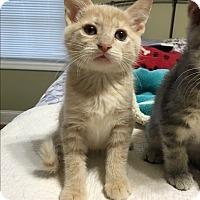 Adopt A Pet :: Echo - Marietta, GA