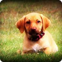 Adopt A Pet :: Luna~meet me! - Glastonbury, CT