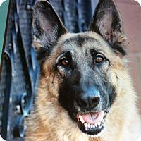 Adopt A Pet :: LADY VON LADENBURG - Los Angeles, CA
