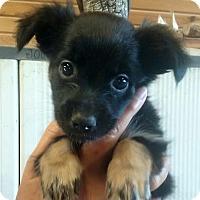 Adopt A Pet :: Eleanor - Lexington, KY