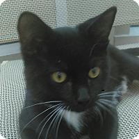 Adopt A Pet :: Randolph - Chula Vista, CA