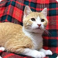 Adopt A Pet :: Franky - Maryville, MO