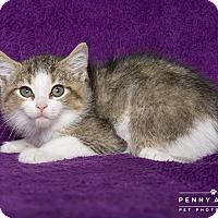 Adopt A Pet :: Peter - Nashville, TN