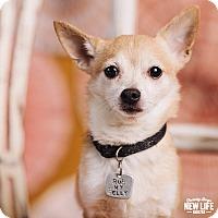 Adopt A Pet :: Redken - Portland, OR