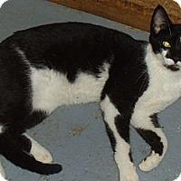 Adopt A Pet :: Simone - Bear, DE