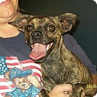 Adopt A Pet :: Benny - Winchester, CA