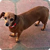 Adopt A Pet :: Pickles 2 - San Jose, CA