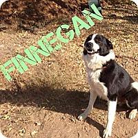 Adopt A Pet :: Finnegan - Orange Cove, CA