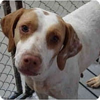 Adopt A Pet :: Lady Bug - Winter Haven, FL