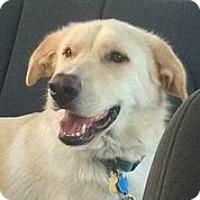Adopt A Pet :: Bones - Austin, TX