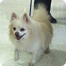 Adopt A Pet :: Angel