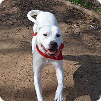 Adopt A Pet :: Drake - Burleson, TX