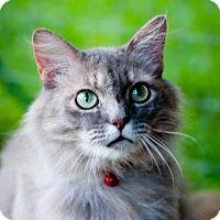 Adopt A Pet :: Clara - Homewood, AL