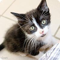 Adopt A Pet :: Secretariat - Ann Arbor, MI