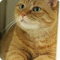 Adopt A Pet :: Tigra - Raleigh, NC