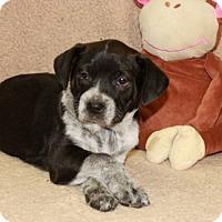 Adopt A Pet :: The Other - Salem, NH