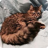 Adopt A Pet :: Lonny - Harrisburg, NC