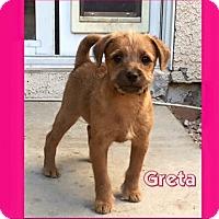 Adopt A Pet :: Greta - Las Vegas, NV