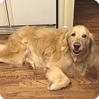 Adopt A Pet :: Beau II - BIRMINGHAM, AL