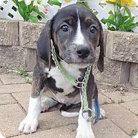 Adopt A Pet :: Sylvana - West Chicago, IL