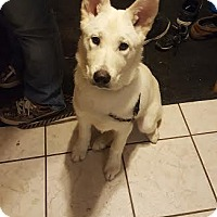 Adopt A Pet :: Polar - Brooklyn Center, MN