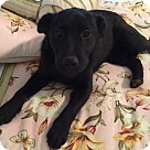 Adopt A Pet :: Lil Boy Jake