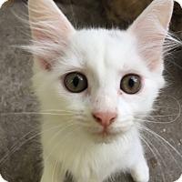 Adopt A Pet :: Eclair - Chattanooga, TN