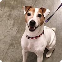 Adopt A Pet :: Randall - Bellingham, WA