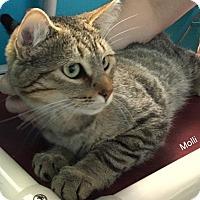 Adopt A Pet :: Molli - Hibbing, MN