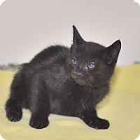 Adopt A Pet :: Stealth - Medina, OH