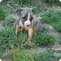 Adopt A Pet :: Emma & piper - mooresville, IN