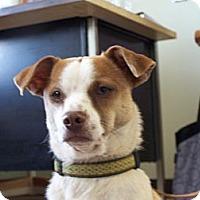 Adopt A Pet :: Spunky - Yreka, CA