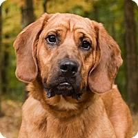 Adopt A Pet :: Carson - Cincinnati, OH