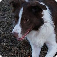 Adopt A Pet :: Milo - Allen, TX