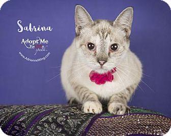 Siamese Cat for adoption in Houston, Texas - Sabrina