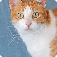 Adopt A Pet :: Tequila - Encinitas, CA