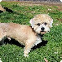 Adopt A Pet :: HERMIE - Washington, DC