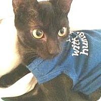 Adopt A Pet :: Splinter - Miami, FL