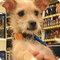 Adopt A Pet :: Tiffany Rex - Phoenix, AZ