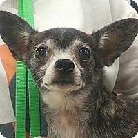 Adopt A Pet :: Socks - geneva, FL
