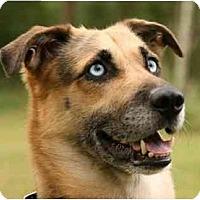 Adopt A Pet :: Frankie - Conyers, GA