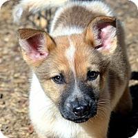 Adopt A Pet :: Venus - Garland, TX