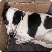 Adopt A Pet :: Carni - Richmond, VA