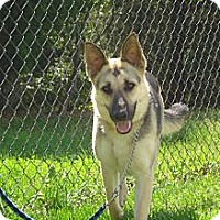 Adopt A Pet :: PUDDIN - ROCKMART, GA