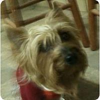 Adopt A Pet :: Dee Dee - Hilliard, OH