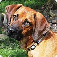 Adopt A Pet :: Duran - Osseo, MN