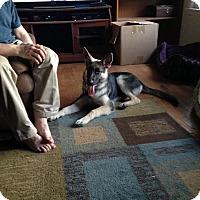 Adopt A Pet :: MISKA - Tully, NY
