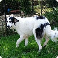 Adopt A Pet :: Elsa - Indian Trail, NC