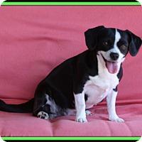 Adopt A Pet :: Wednesday - Edmonton, AB